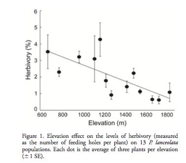 Dépendance du taux d'insectes herbivores en fonction de l'élévation.